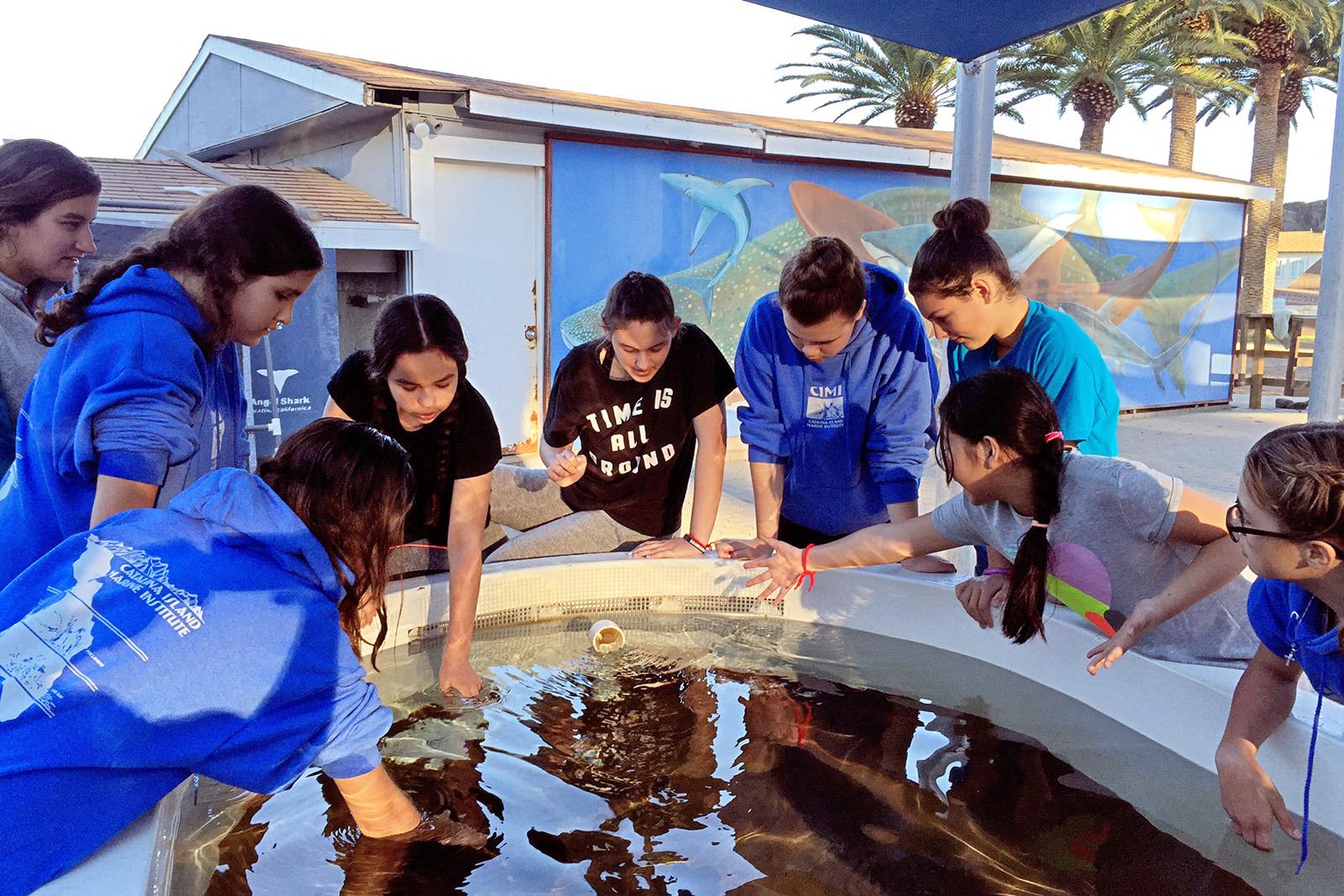Petting Sharks and Stingrays